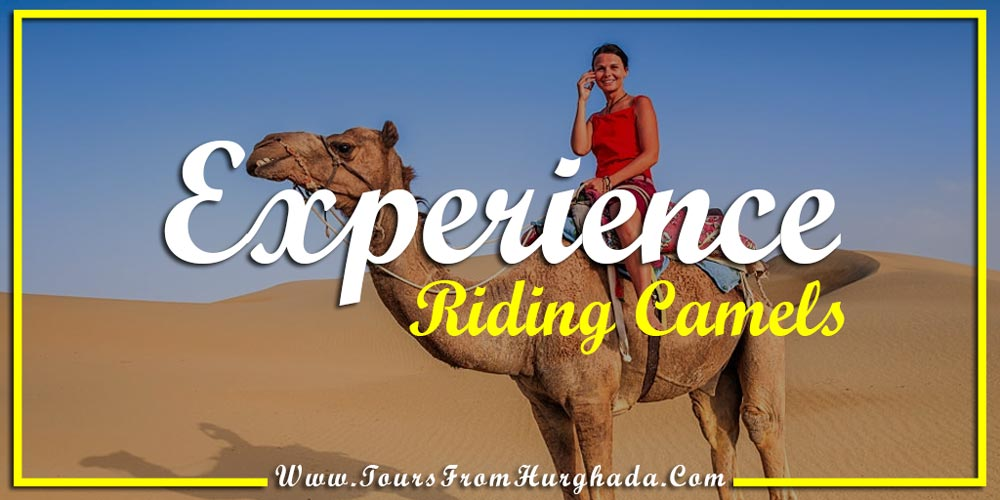 Riding Camels - Things to Do in Port Ghalib - Tours from Hurghada
