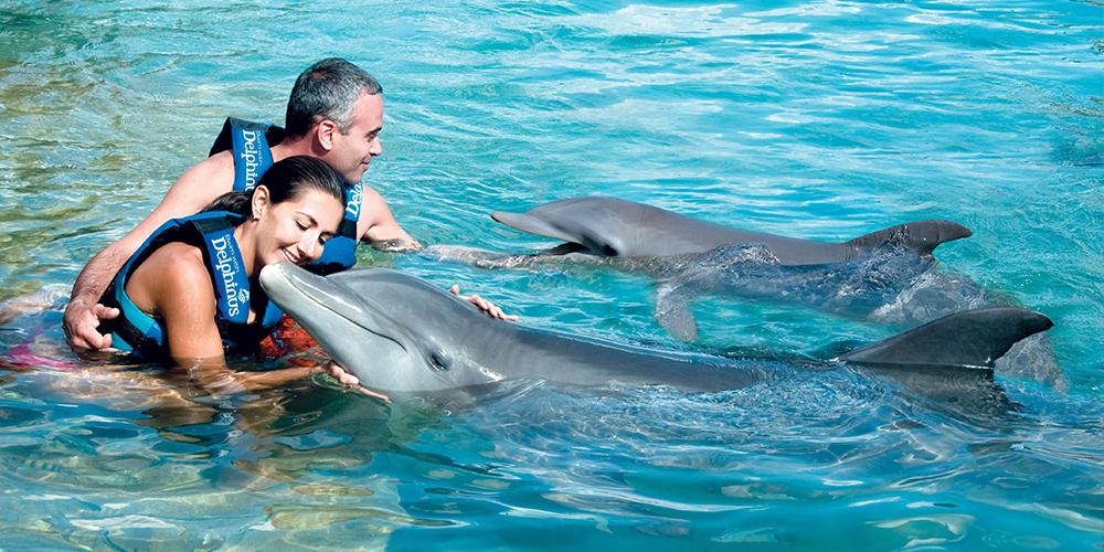 Sataya Dolphin Reef Snorkeling Trip From Port Ghalib - Port Ghalib Excursions - Tours From Hurghada