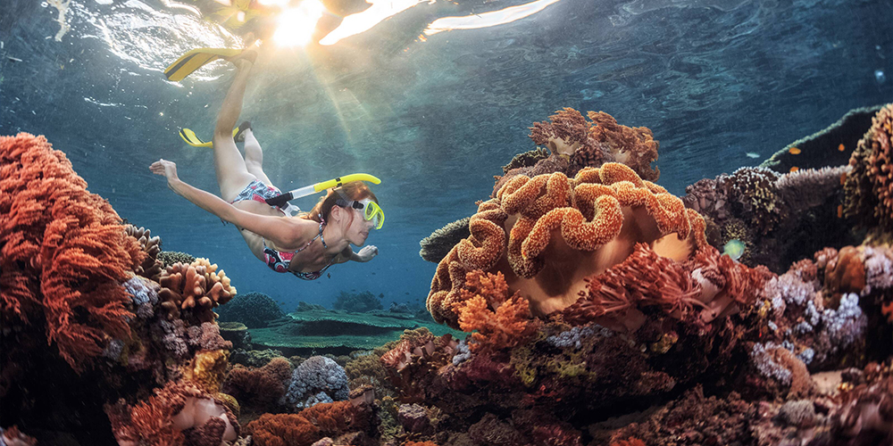 Sataya Dolphin Reef Snorkeling Trip From Port Ghalib - Tours From Hurghada