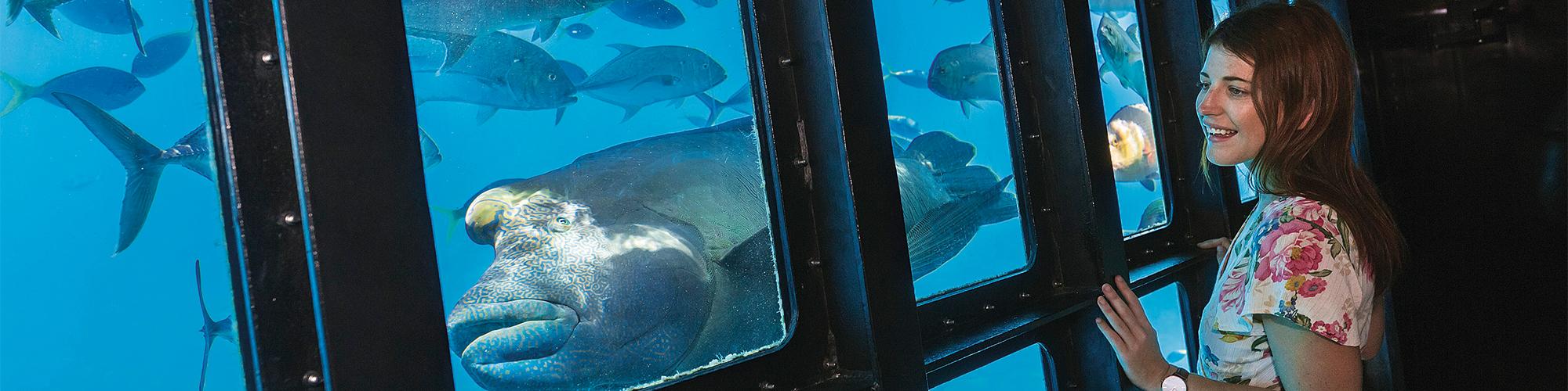 Semi Submarine Port Ghalib Tours - Tours From Hurghada