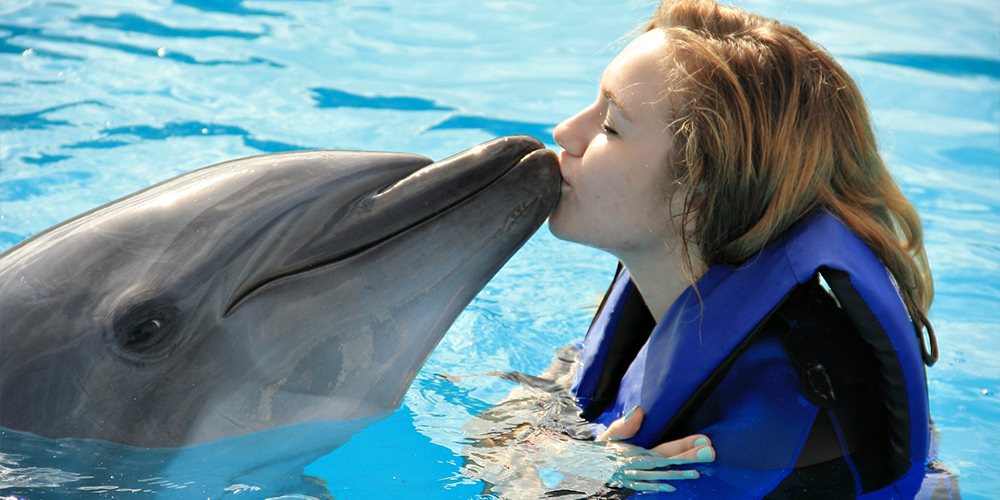 Swim with Dolphins in Marsa Alam - Marsa Alam Tours - Tours From Hurghada