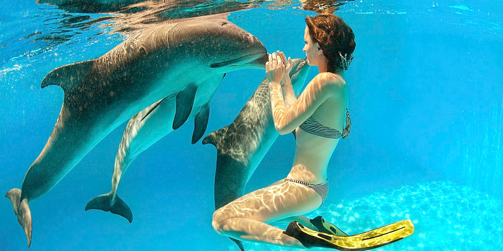Swimming with Dolphins Excursion Port Ghalib - Tours from Hurghada