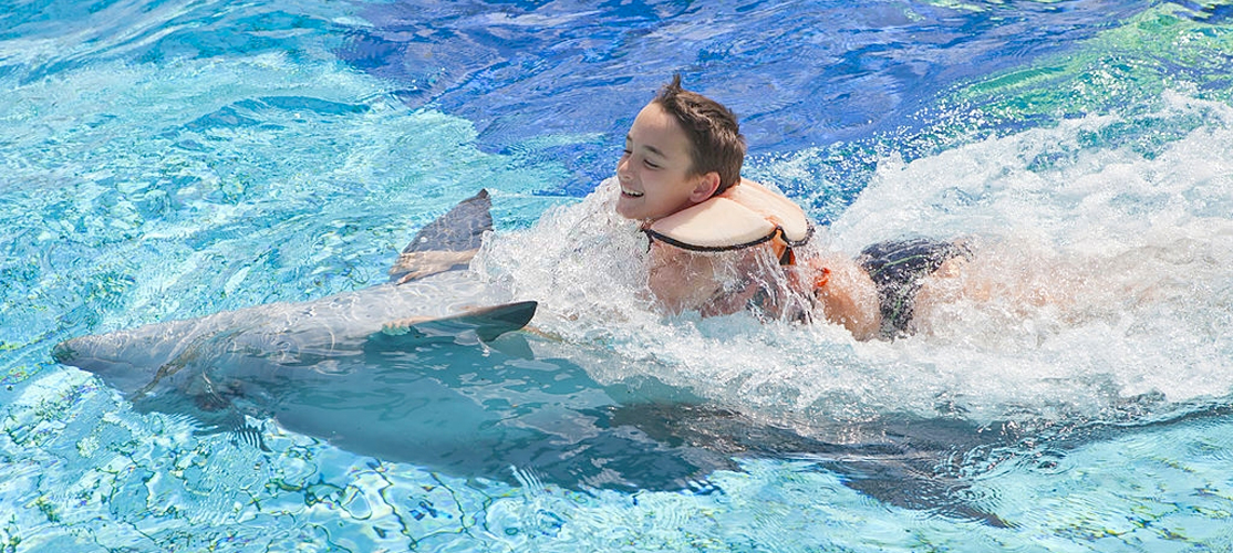 Swimming with Dolphins Excursion from Port Ghalib - Tours from Hurghada