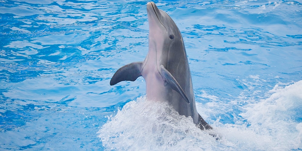 Swimming with Dolphins Port Ghalib - Tours from Hurghada