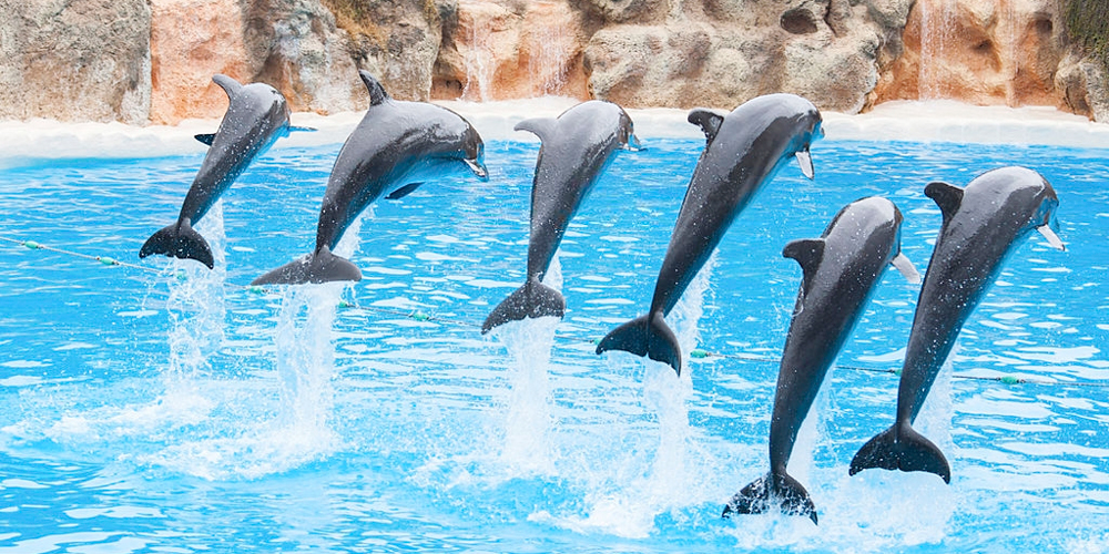 Swimming with Dolphins from Port Ghalib Excursion - Tours from Hurghada