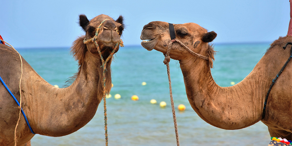 Wadi El Gemal From Port Ghalib - Port Ghalib - Tours From Hurghada