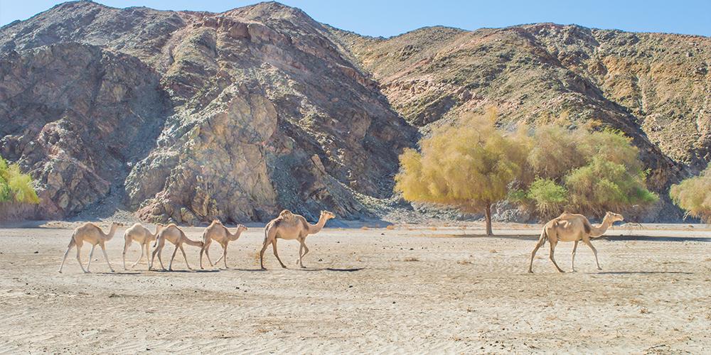 Wadi El Gemal Tour From Port Ghalib - Port Ghalib to Wadi El Gemal - Tours From Hurghada